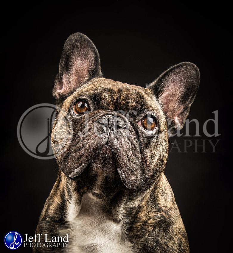 Pet Portrait Photographer