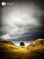 Sycamore Gap - Lake Disctrict